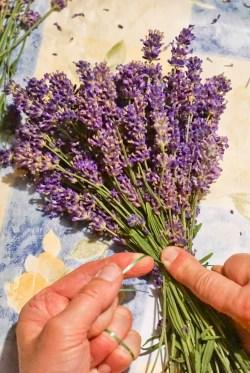 Rittergut Kleingera Lavendel gebunden