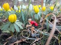 Tommy-im-Blütenrausch