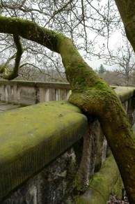 Schlossterrasse zum Park mit eingewachsener Magnolie