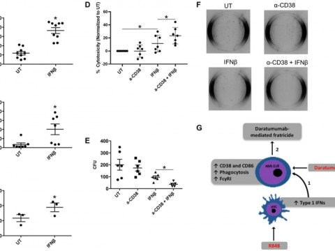 Oncotarget : 형질 세포질 수지상 세포의 활성화는 AML 세포 분열을 촉진합니다