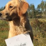 1:a pris med Vida på vårt andra B-jaktprov NKL i Ludvika