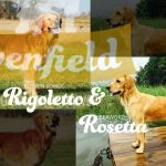 Upcoming litter: Roswin Lowly Rigoletto and Beaworthy Rosetta