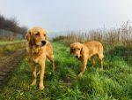 Chilli och Mira rastas på väg mot Holland
