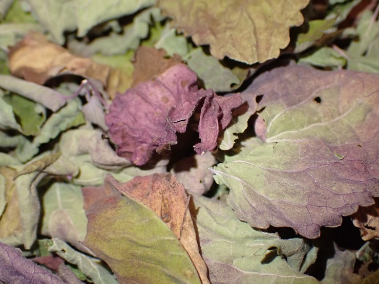 Dried anise hyssop leaves at Riven Joiner & the Homestead Store.