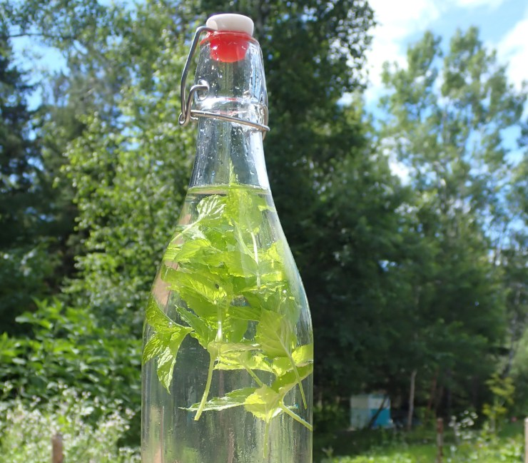 Brewing mint sun-tea at Riven Joiner & the Homestead Store.