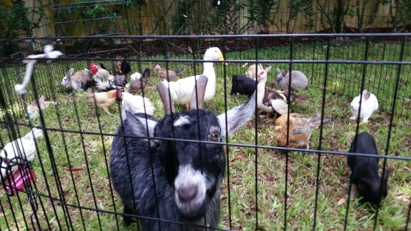 Petting Zoo Miami Miami Petting Zoo Rental Kids Party Miami Rivera Events