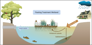 Floating Treatment Wetlands targeted for city canal | Friends of the Rappahannock