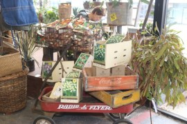 The Peconic River Herb Farm is selling plants, bulbs , fresh honey, and other farm-produced goodies.