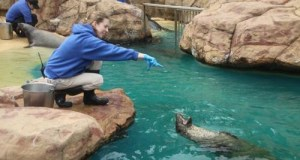 2012 1019 aquarium