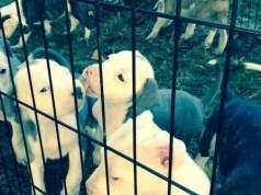 2031 1027 puppies