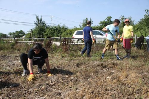 Kiwanis collegians clean up overgrown Riverhead park
