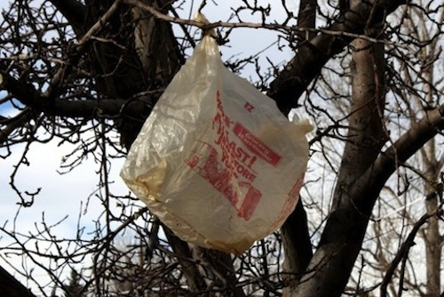 2014_1028_plastic_bag_in_tree