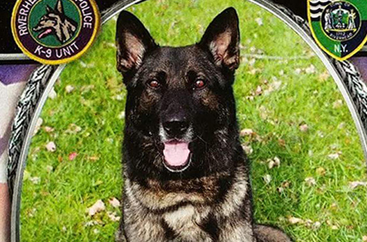 Photo: Riverhead Police Department.