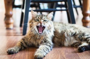 KATHARINE SCHROEDER PHOTOCamo caught in mid-yawn.