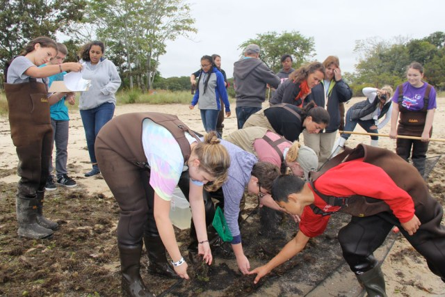 Riverhead High School students count the different types of species caught in their seine. (Credit: Carrie Miller)