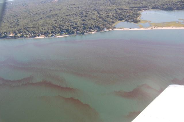 Rust tide in Flanders Bay Sept. 12, 2014 (Credit: Courtesy SBU)