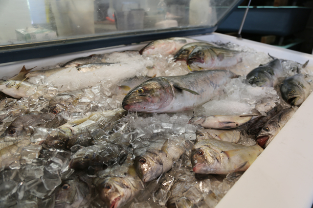 Bluefish at Southold Fish Market. (Credit: Krysten Massa)