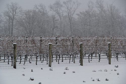 CARRIE MILLER PHOTO | The snow cover acts as an insulator, protecting soil from warming up beneath it, experts said.