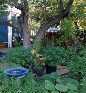 full blown garden