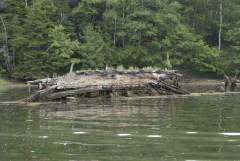 Remnants of an Ice Schooner in Robinhood Cove