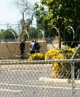 Then hit and run suspect was cornered and apprehended behind a medical office facility. Adrian Saldana photo