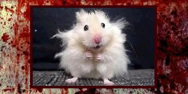 Guest Writer Spotlight: Never put a feral hamster in a Yeti cup and try wearing a floor mat as a tube top.