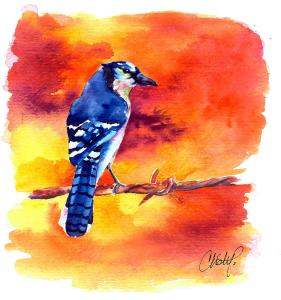 blue-jay-bird-on-a-wire-christy-freeman