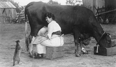 Woman milking a cow, 1921