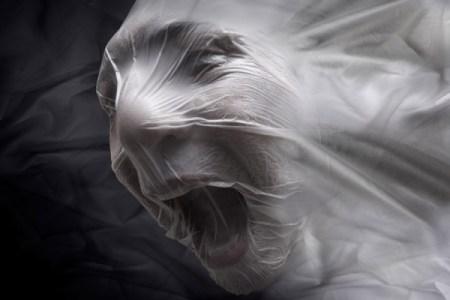 one_eyeland_silent_scream_by_anton_van straaten_29192