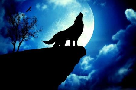 Wolf-Blue-Dekstop-HD