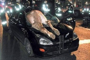 funny-pictures-horse-in-your-car-DmE