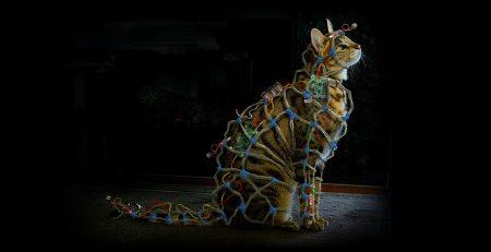faraday-cat-the-darkest-hour-concept-art