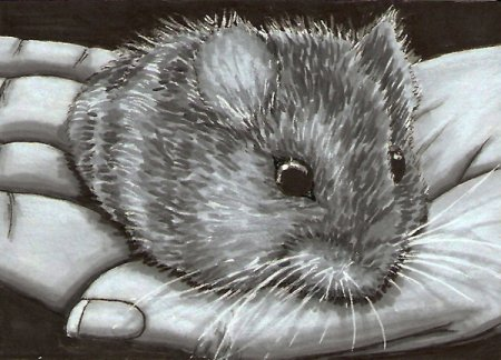 Hamster___ACEO_by_Sofera