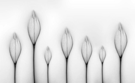 tulip_pussy_by_boorazero
