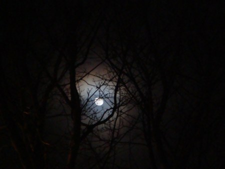 forest_hills_moon_by_21giants-d2zkb94