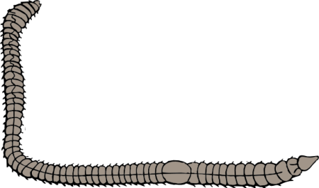 free-vector-earth-worm-clip-art_104316_Earth_Worm_clip_art_hight