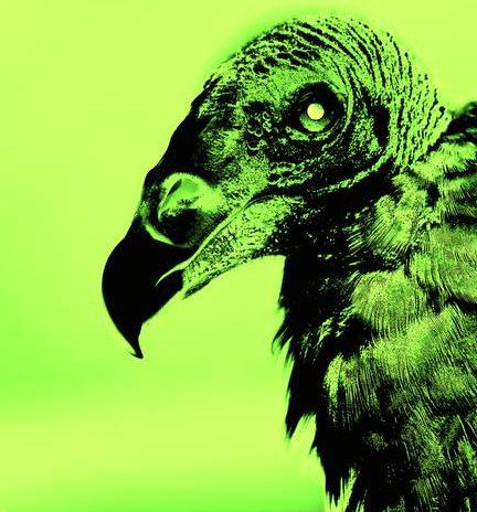 Evil-Bird_art