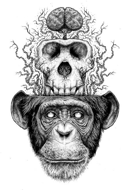chimpandskullcopy