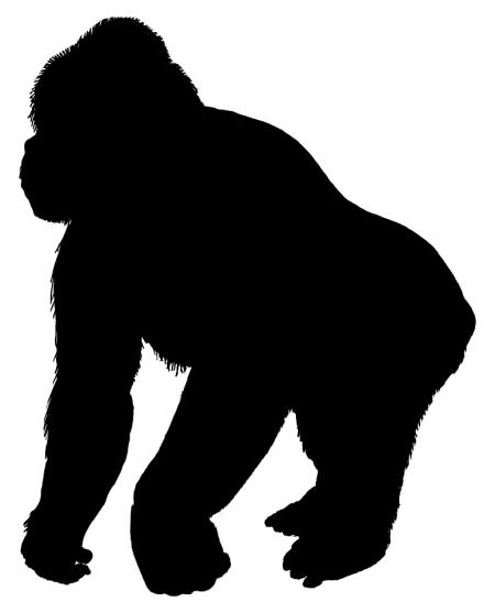 gorilla_psfd