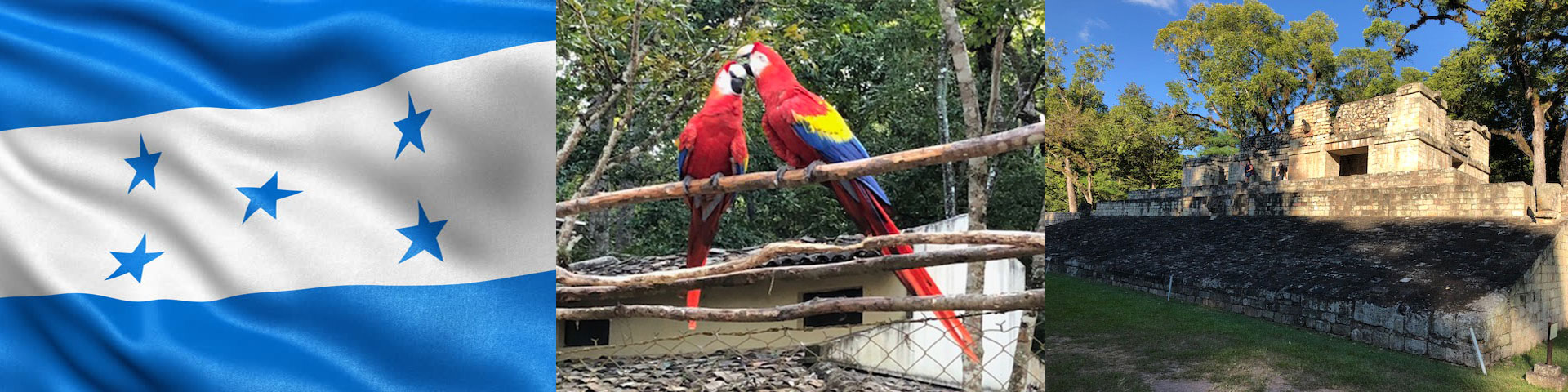 Honduran Flag, Scarlet Macaws, and Mayan Ruins in Copan