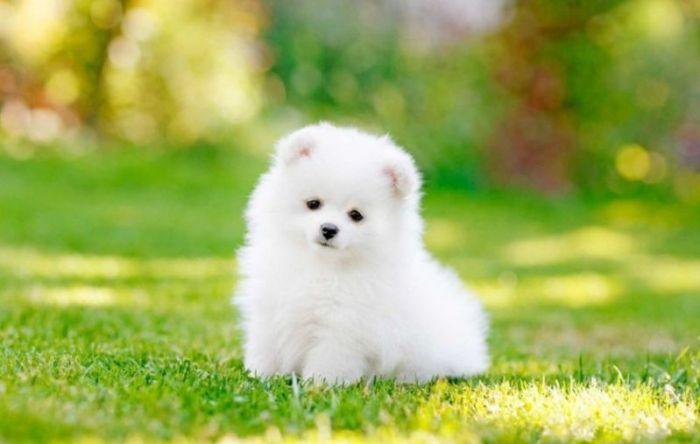 Mengenal tentang siklus hidup anjing