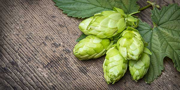 Sterling Hops Profile