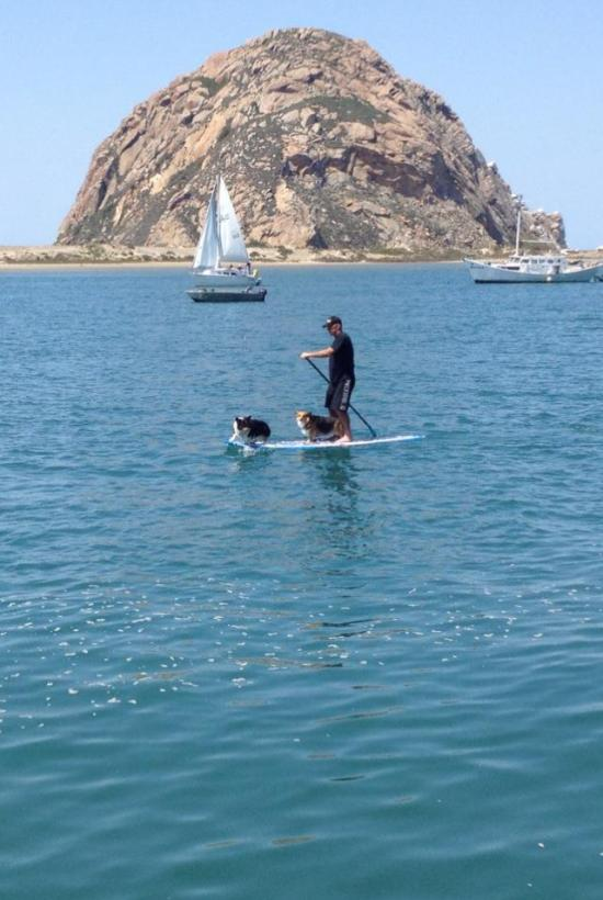 man with two dogs while stand up paddleboarding