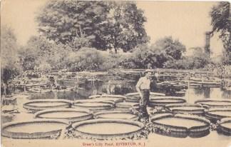 Dreer's Lily Pond