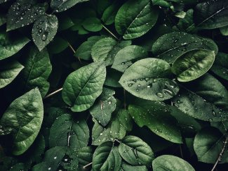 close-up-photography-of-leaves-with-droplets-807598