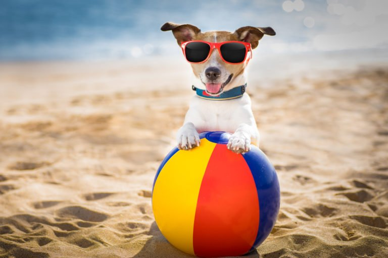 summer safety tips for pets in Cork