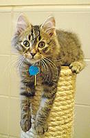 humane-cat.jpg