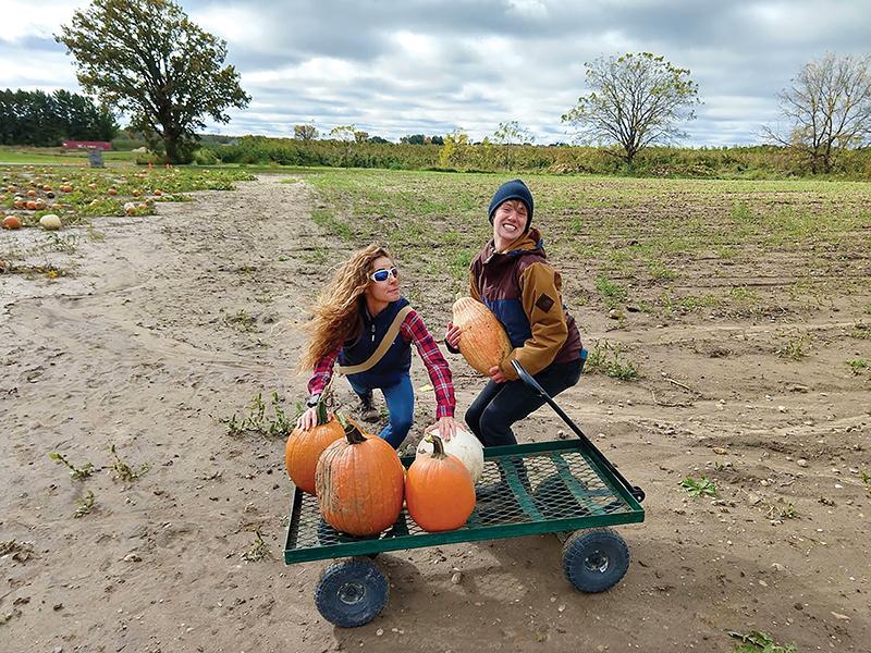 pumpkin patchweb