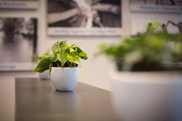 Cooperators Insurance Office indoor plants Sherwood Park Edmonton
