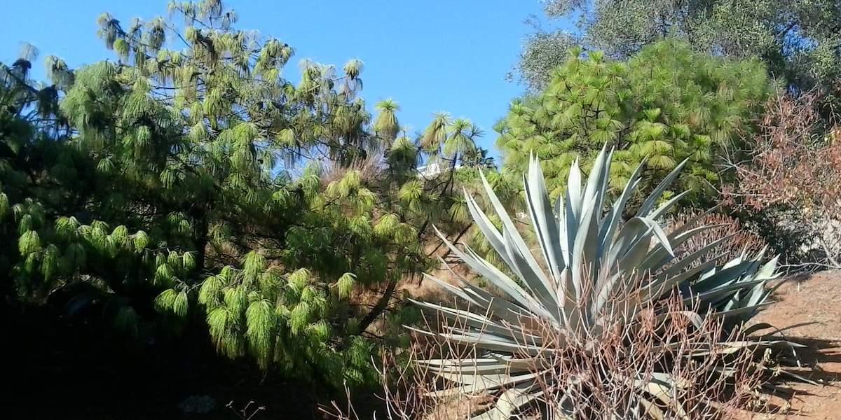 Jardin Botanique De Nice An Oasis Of Peace Riviera Buzz